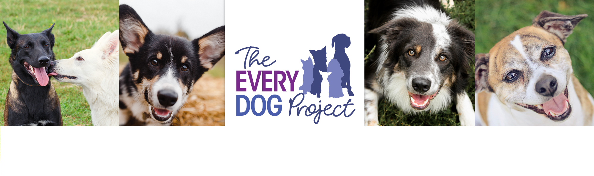 The Every Dog Project