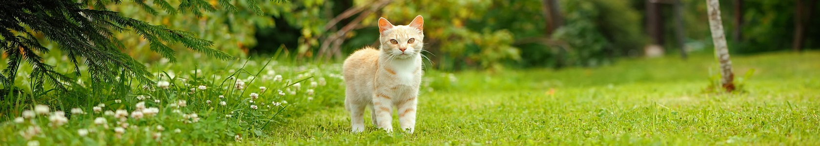 Cat Walking on Green Grass (16:9 Aspect Ratio)
